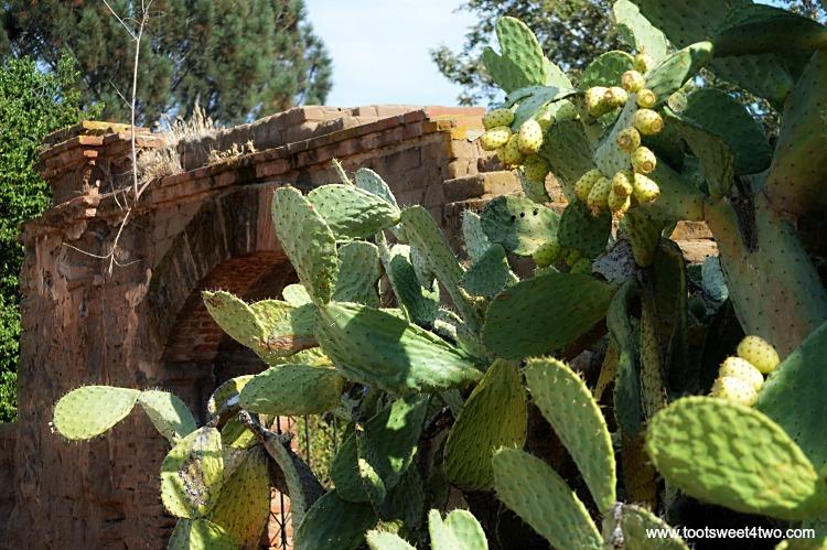 Cactus at Old Mission San Luis Rey Gardens