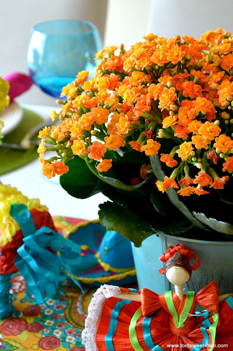 Orange Kalanchoe flowers for Decorating the Table for a Cinco de Mayo Celebration