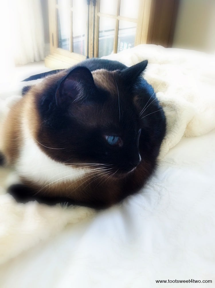 cat home care london