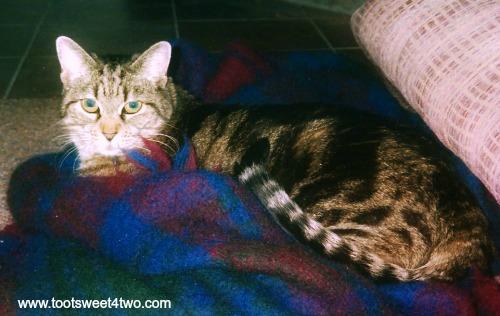 Dorothy on a blanket