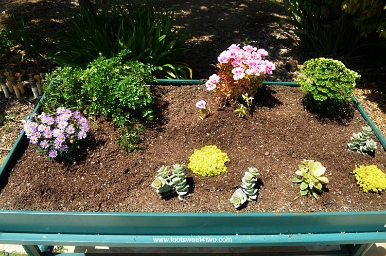 Adding plants to L Garden miniature fairy garden