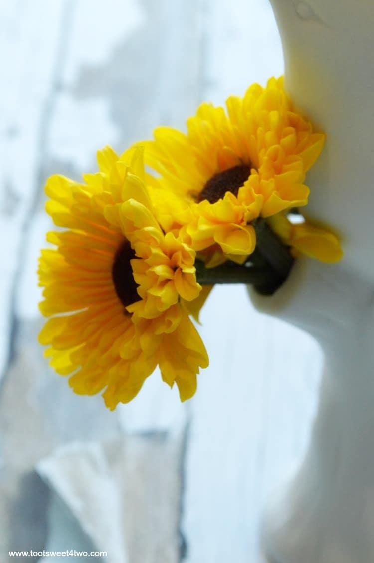 Close-up of Viking Chrysanthemums in Vase