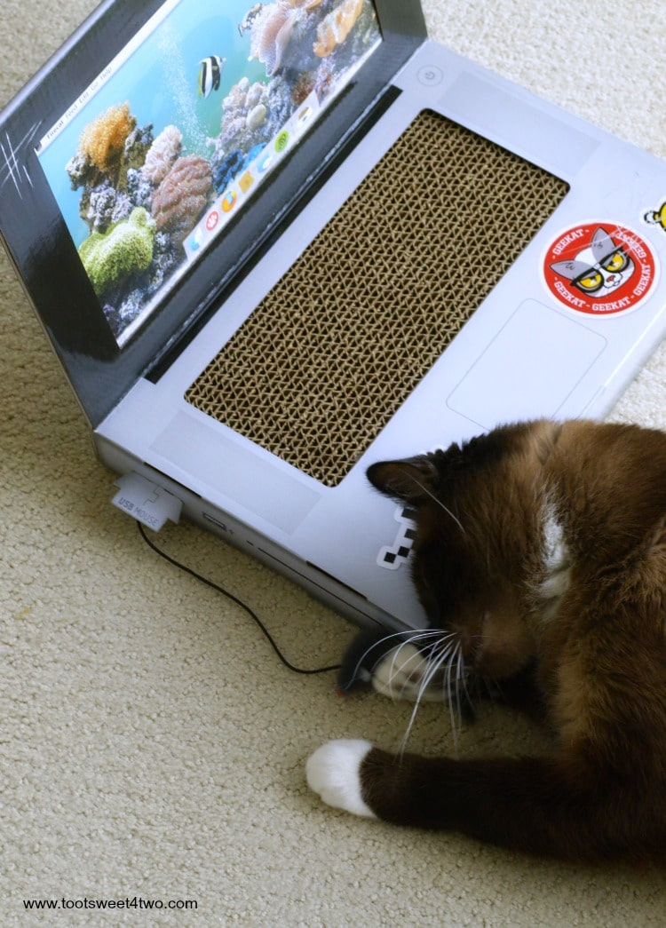 Coco grabbing the mouse on the Laptop Cat Scratching Pad