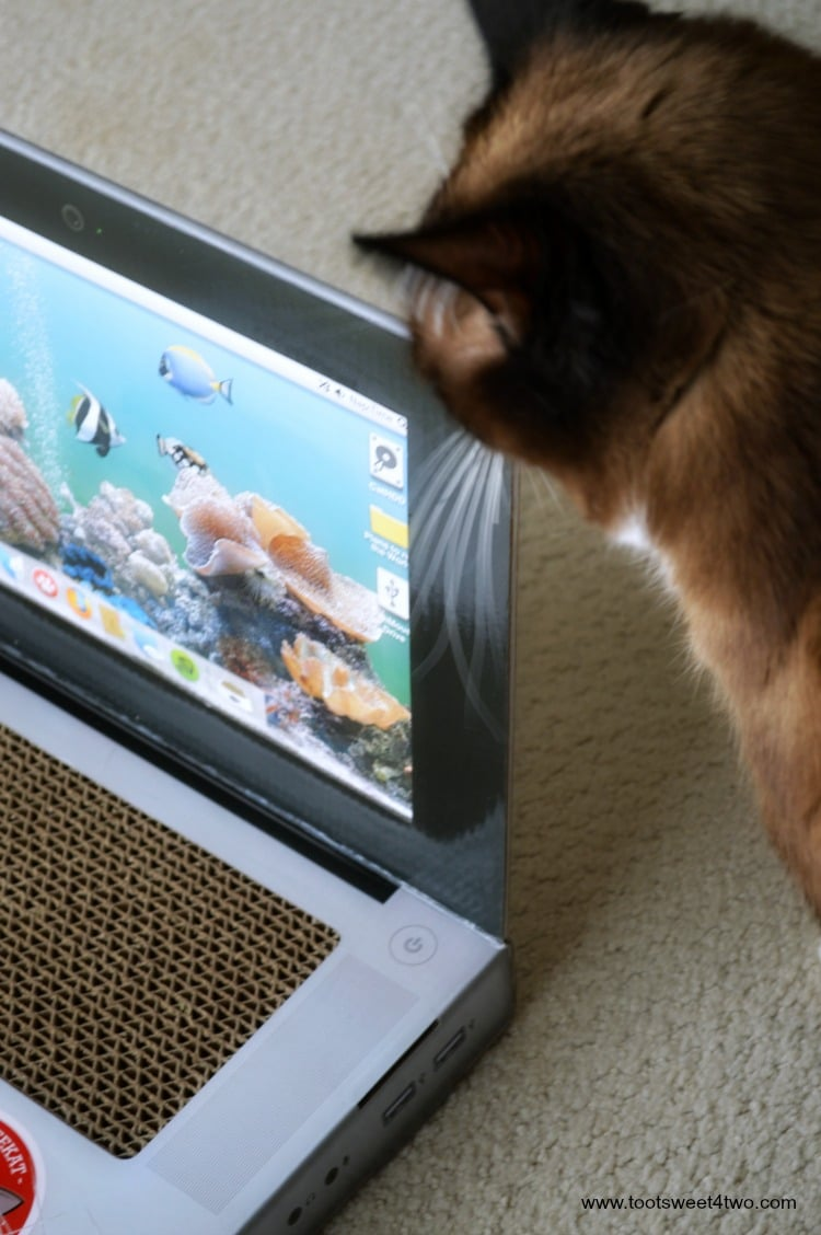 Coco marking Laptop Cat Scratching Pad