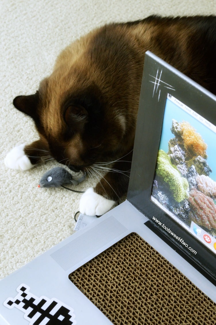 Coco pulling on the USB connection on the Laptop Cat Scratching Pad