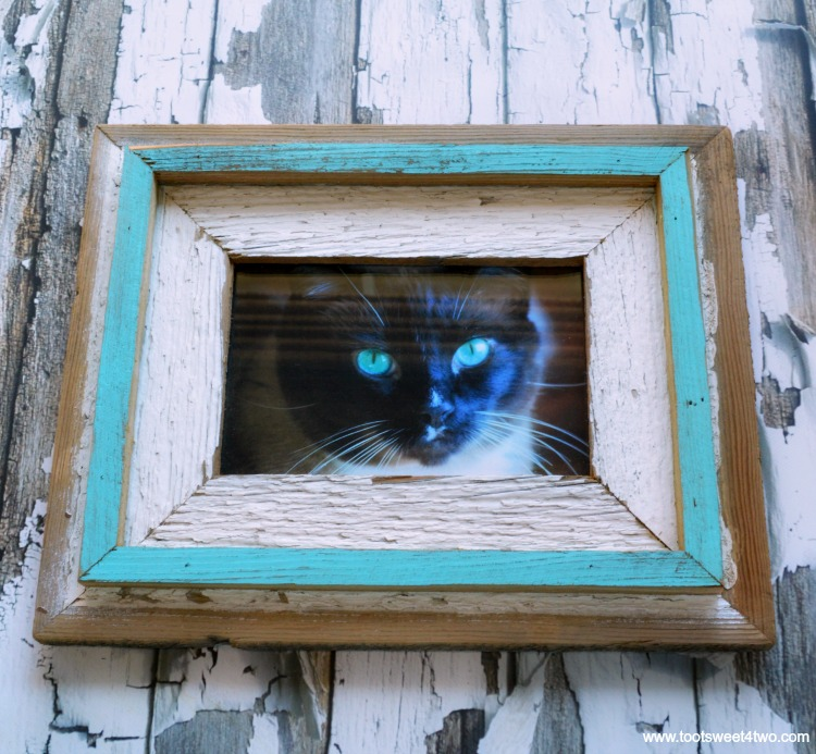 Coco's photo in Repurposed Wood Frame